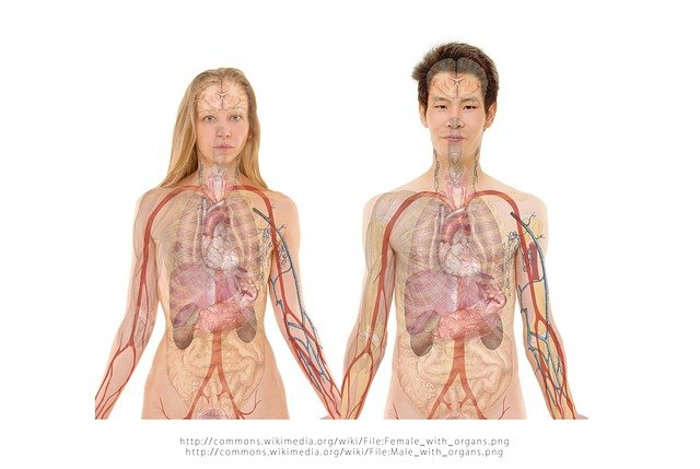 Things You Might Not Know About Human Body